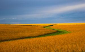 Nebraska corn fields